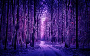 Picture winter, forest, digital painting, winter forest