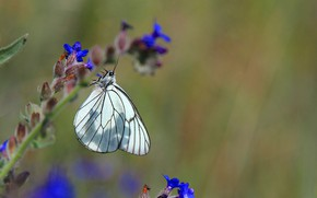 Picture flower, butterfly, white