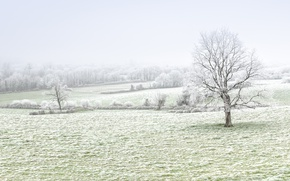 Picture winter, frost, field, trees