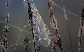 Picture grass, nature, web