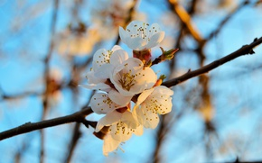 Picture macro, branch, spring, petals, flowering