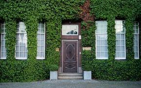 Picture greens, the city, street, home, the door, Netherlands, facade, entrance, vine, Netherlands, Rotterdam, landscaping, Westzeedijk …