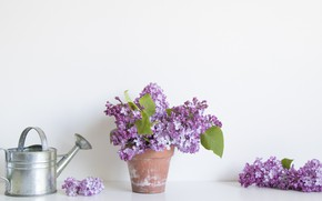 Picture bouquet, lake, lilac, bucket