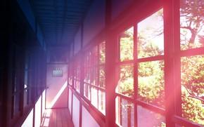 Picture trees, glare, interior, corridor, by K.Hati