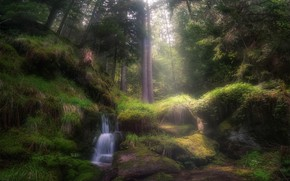 Picture forest, the sun, trees, stones, waterfall