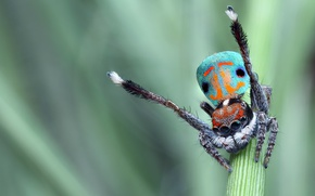 Picture eyes, macro, bright, nature, pose, green, background, pattern, spiders, dance, legs, spider, stem, color, beautiful, …