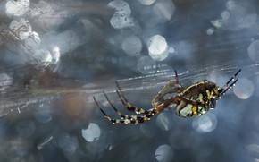 Picture background, web, spider