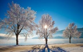 Picture winter, road, trees, lake, Norway, Norway, Nutodden, Heddalsvatnet Lake, Notodden