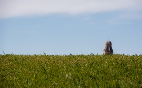 Picture grass, tower, sky