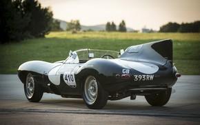 Picture road, lawn, Jaguar, back, car, fin, racing, D-Type