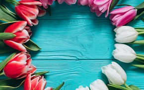 Wallpaper Flowers, Spring, Tulips, Background