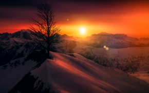 Picture the sky, snow, landscape, sunset, mountains, tree, beauty