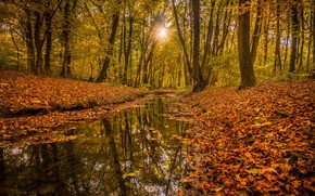 Picture Nature, Autumn, Forest, Yellow leaves