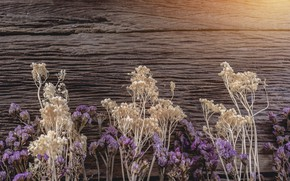 Picture background, Flowers, twigs