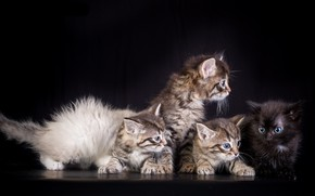 Picture background, kittens, kids
