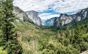 Picture forest, landscape, mountains