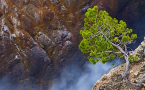 Picture tree, rocks, canyon, Wyoming, gorge, USA, National wildlife refuge Shoshone