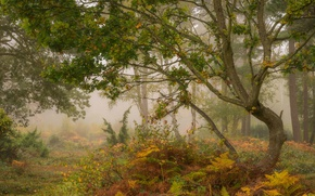 Picture autumn, forest, trees, fog