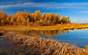 Wallpaper USA, Wyoming, trees, Grand Teton, autumn, lake
