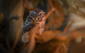 Picture birds, branches, foliage, Chicks, owlets
