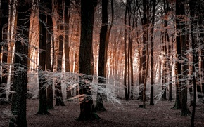 Picture frost, forest, trees