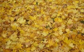 Picture autumn, leaves, Park