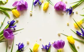 Picture flowers, yellow, purple, tulips, fresh, yellow, flowers, beautiful, tulips, spring, purple