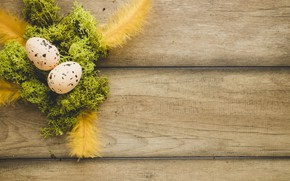 Picture moss, eggs, spring, Feathers, Easter, Holiday