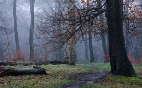 Picture autumn, forest, trees, fog, haze, path
