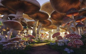 Picture mushrooms, trail, Mushroom Forest