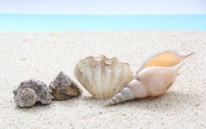 Picture sea, beach, summer, Nature, shell