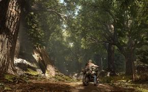 Picture zombie, forest, Sony, bike, tree, man, survivor, fear, survival horror, Days Gone