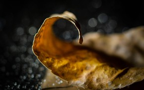 Picture blur bokeh, autumn leaf, a fallen leaf