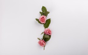Picture flowers, roses, bouquet, pink, pink, flowers, composition, roses