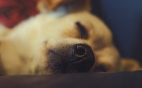 Picture macro, stay, dog, nose