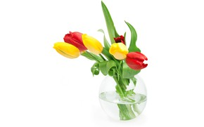 Picture leaves, water, flowers, tulips, red, white background, vase, buds, wet, yellow