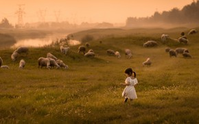 Picture field, fog, girl