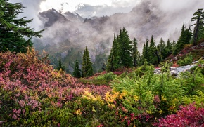 Picture forest, grass, clouds, trees, mountains, fog, the view from the top