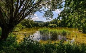 Picture trees, landscape, nature, lake