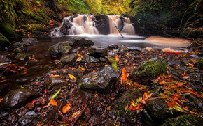 Picture autumn, forest, leaves, waterfall, stream