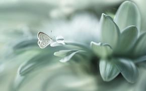 Wallpaper flower, butterfly, drop, petals, bokeh
