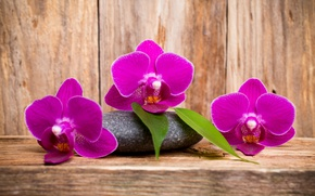 Picture wood, Orchid, flowers, orchid, purple