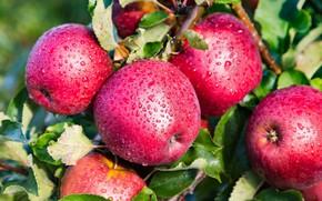 Picture drops, apples, fruit
