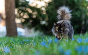 Picture cat, look, tail, lawn
