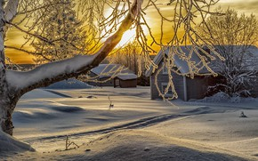 Picture winter, the sun, snow, trees, branches, nature, home