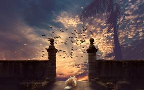 Wallpaper cat, the sky, cat, sunset, birds, Palma, photoshop