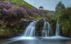 Picture water, river, stones, stream, flowering, the bushes