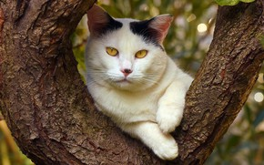 Picture cat, summer, cat, face, nature, background, tree, foliage, portrait, paws, trunk, important, yellow eyes, white …