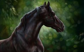 Picture horse, oil, art, watercolor, pencil, painting, horse, horse, gouache, wallpaper., painting painting, forest nature, black …