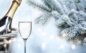 Picture winter, snow, branches, tree, New Year, glasses, frost, champagne, happy, winter, snow, New Year, fir …